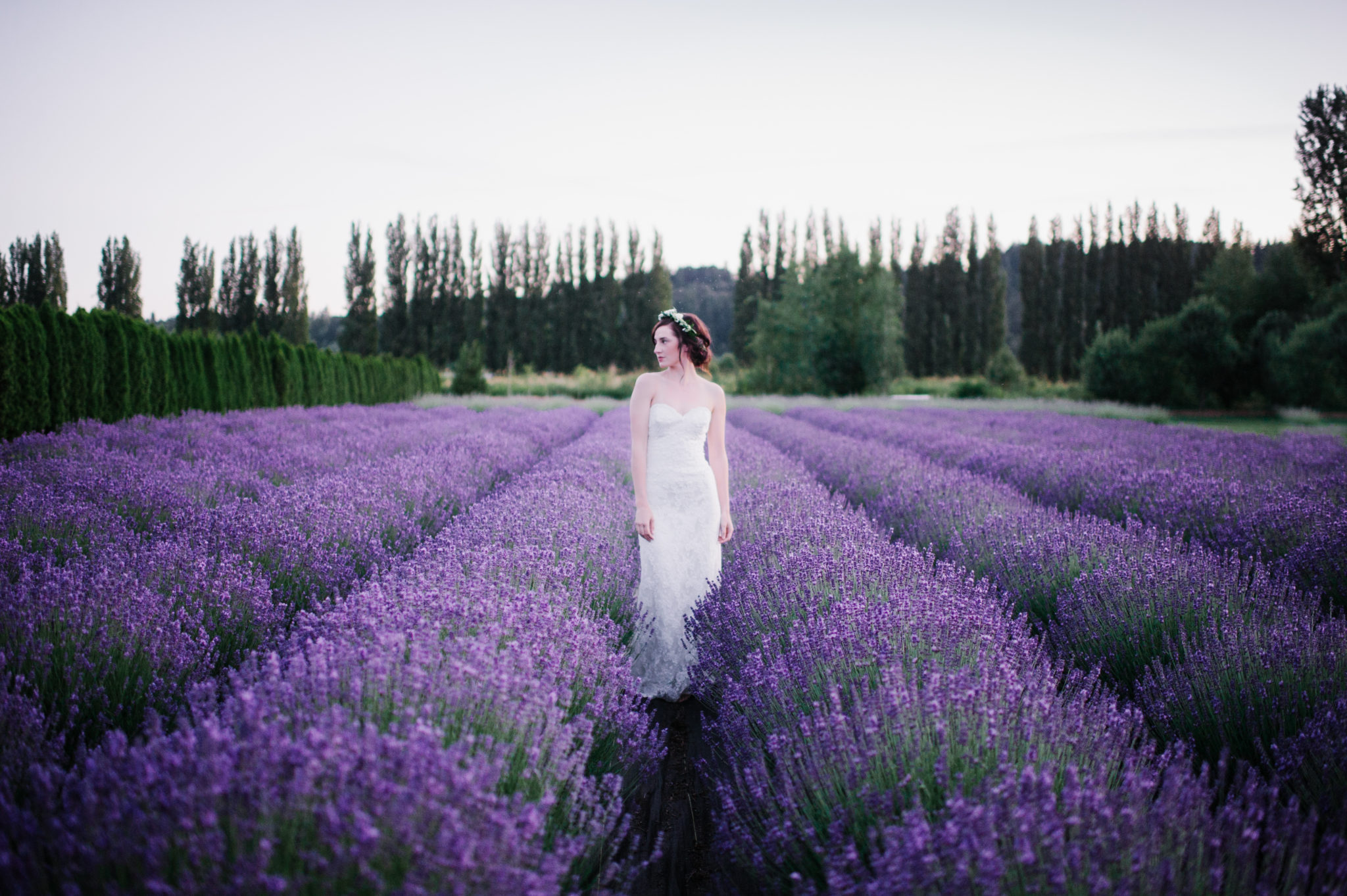 Bride in Field of Woodinville Lavender