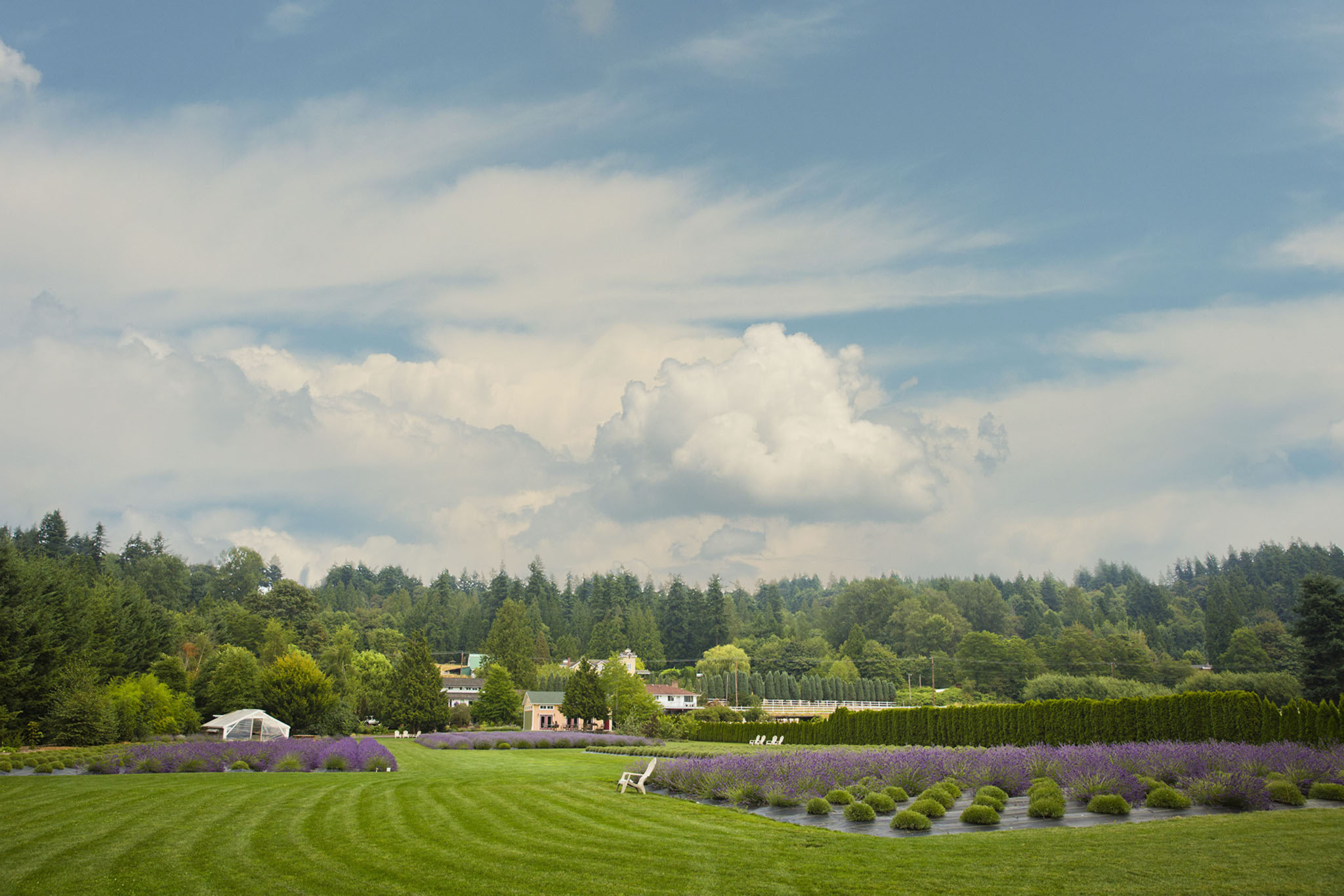 woodinville-lavender01