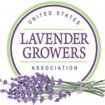 us-lavender